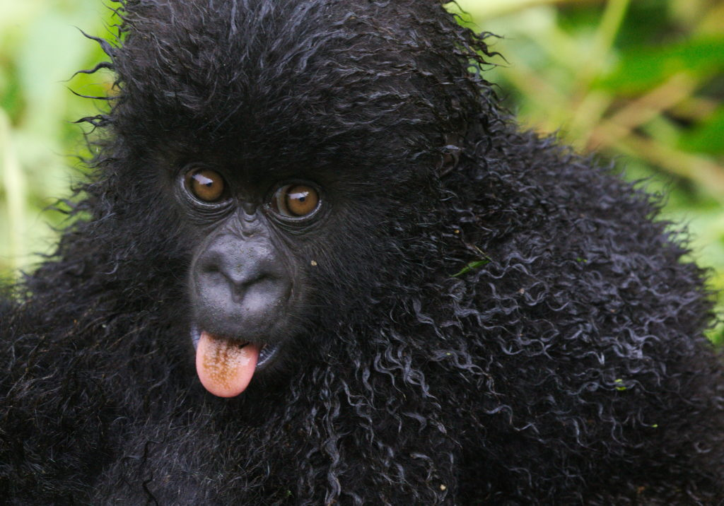 20160414_Rwanda_gorillatrek_babyGoodbyeSmile