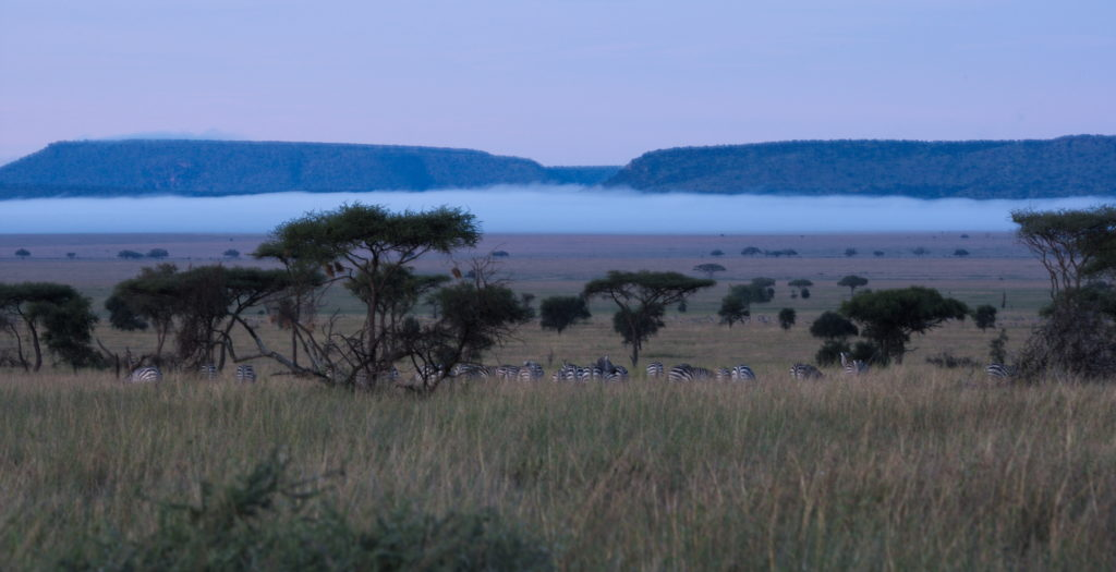 20160417_Tanzania_Serengeti_morningMist
